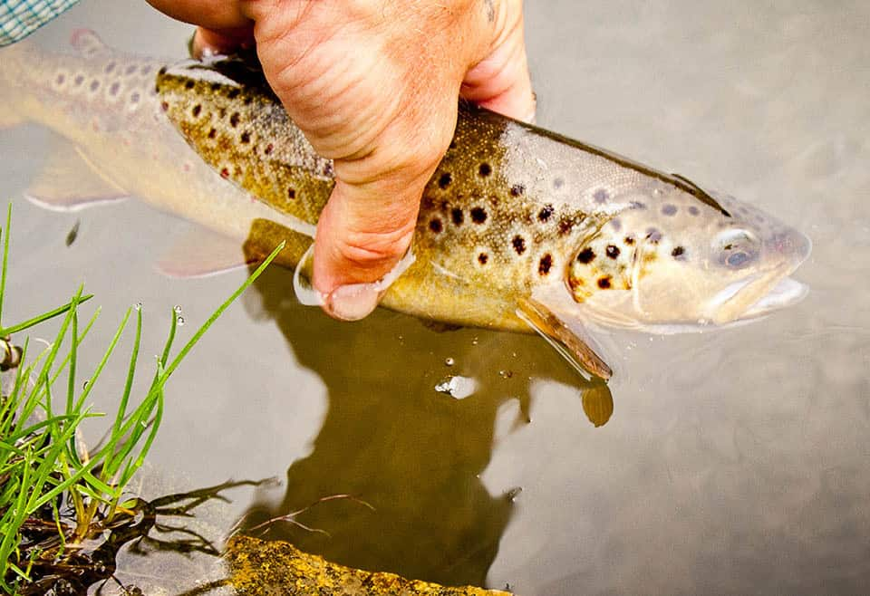 Hansi Guided Trout Fishing MN